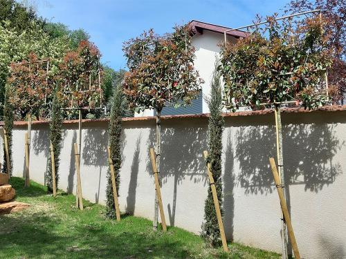 Occultation d'un vis à vis avec des arbres rideaux